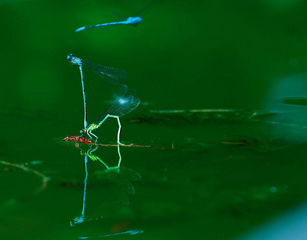 Endlich Horizont - Libelle